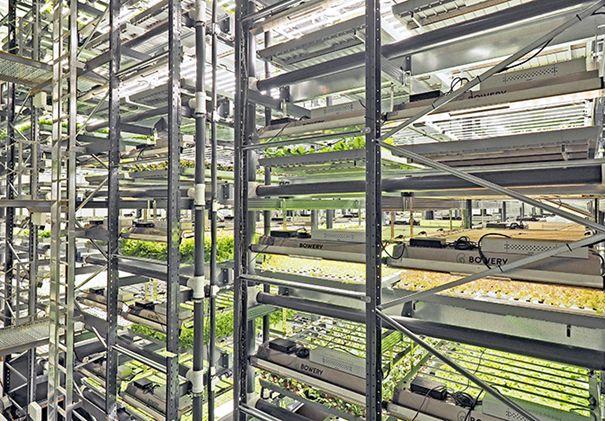 Regalanlage von Bowery Farming für den Gemüseanbau